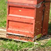 Méhkas